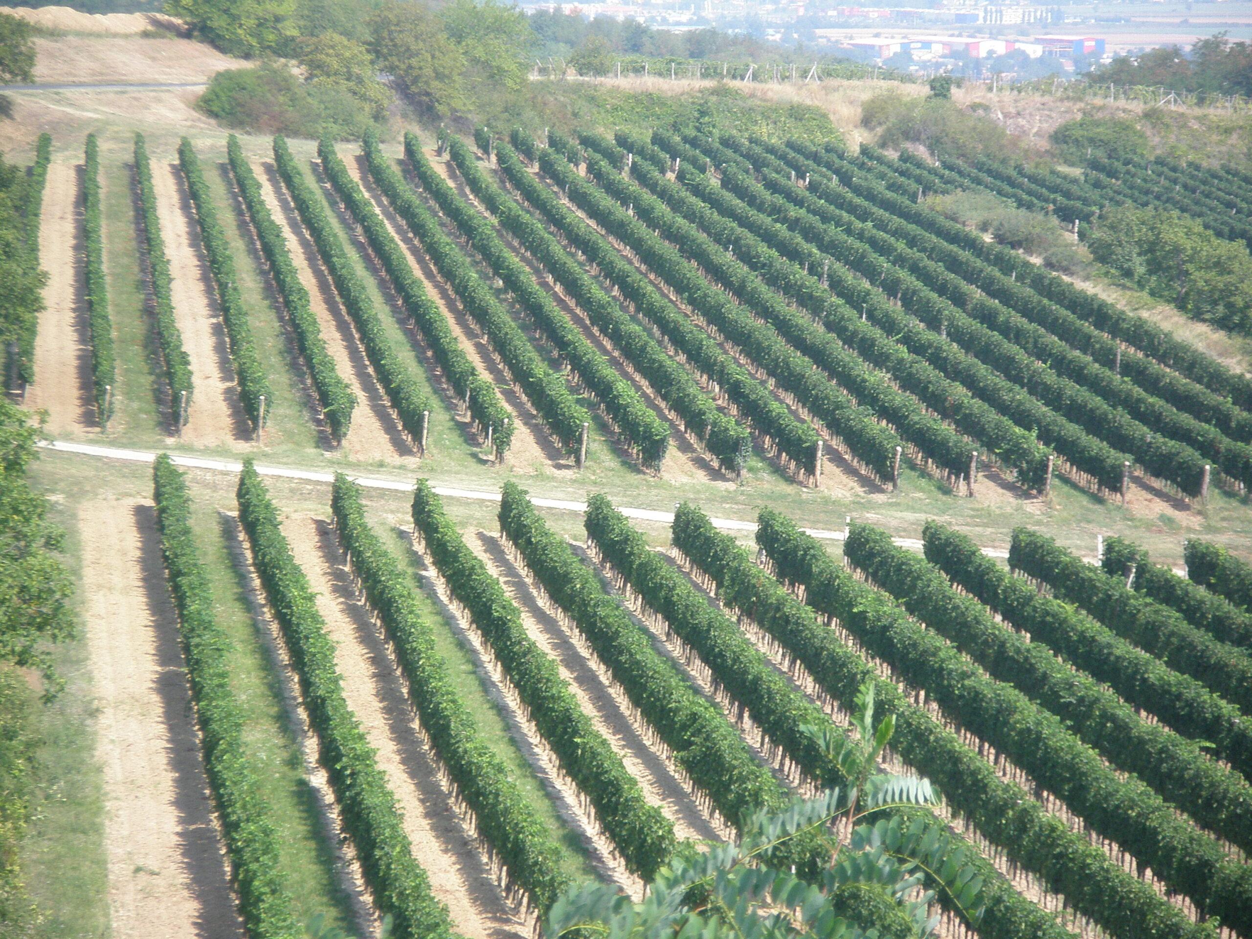 International Wine Club in California